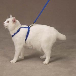 cat-belt-1
