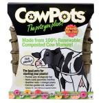 cow-pot-1